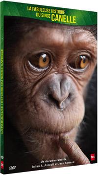 chimpanzé prostituée